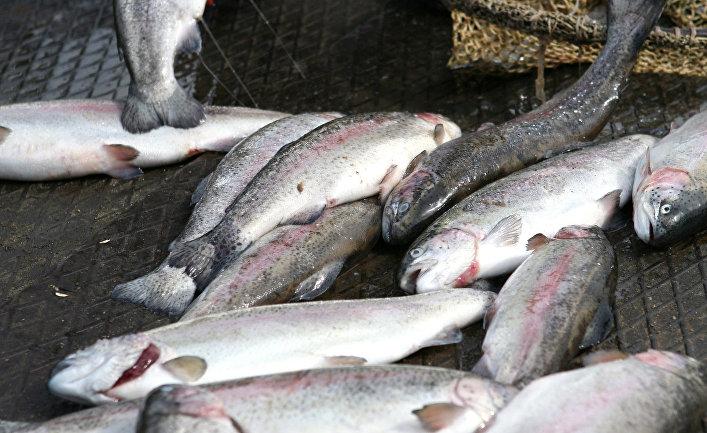 токсичность рыбных запасов