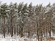 Зимний лес, Украина
