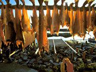 Подвешенная рыба сушится на берегу рыбацкого посёлка на севере Норвегии.