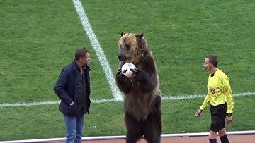 Медведь на футболе