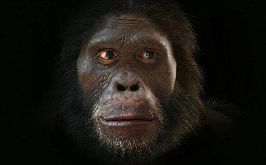 Как менялось лицо человека в процессе эволюции