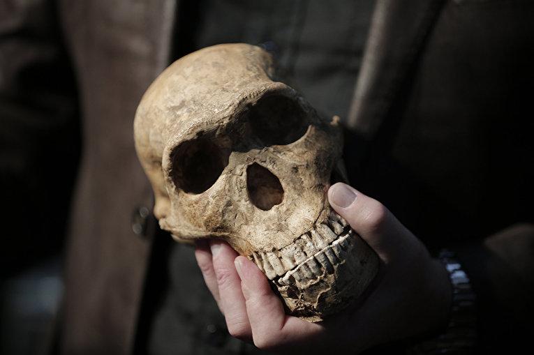 Американский антрополог Ли Роджерс Бергер держит копию черепа Homo Naledi
