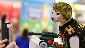 """Кошка породы сфинкс в костюме на международной выставке """"Кэтсбург 2017"""" в Москве"""