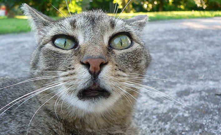 Кот удивлен