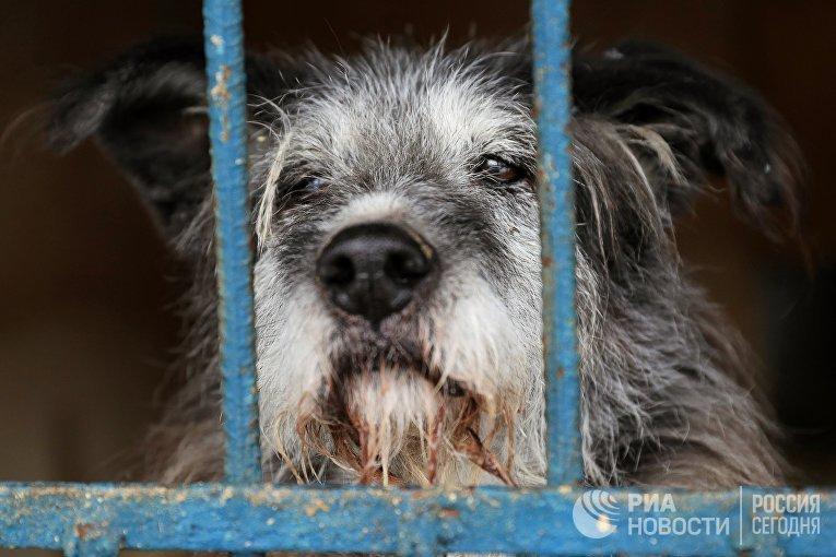 Собака в вольере приюта для бездомных собак