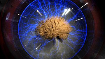 Челвеческий мозг на выставке в Сан-Паулу