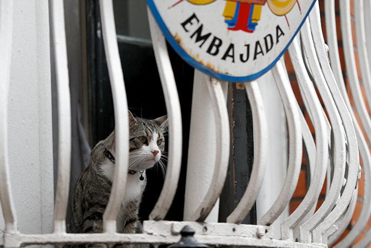 Кот Джулиана Ассанжа на балконе посольства Эквадора в Лондоне