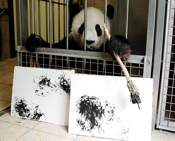 Гигантская панда Ян Ян