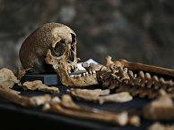 В Лондоне найдены скелеты погибших от чумы в XIV веке