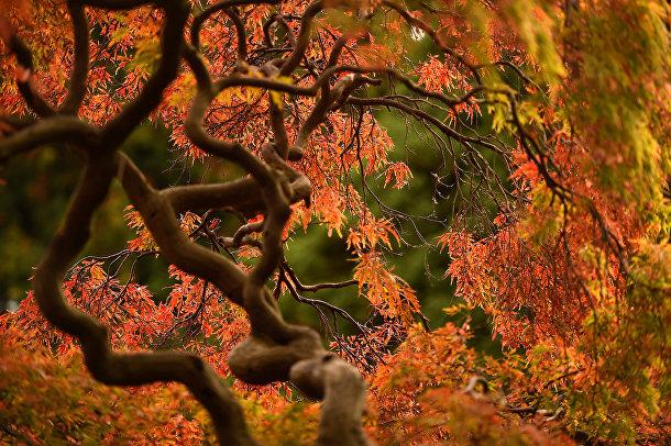 Осенняя листва в Ботаническом саду в Дублине, Ирландия