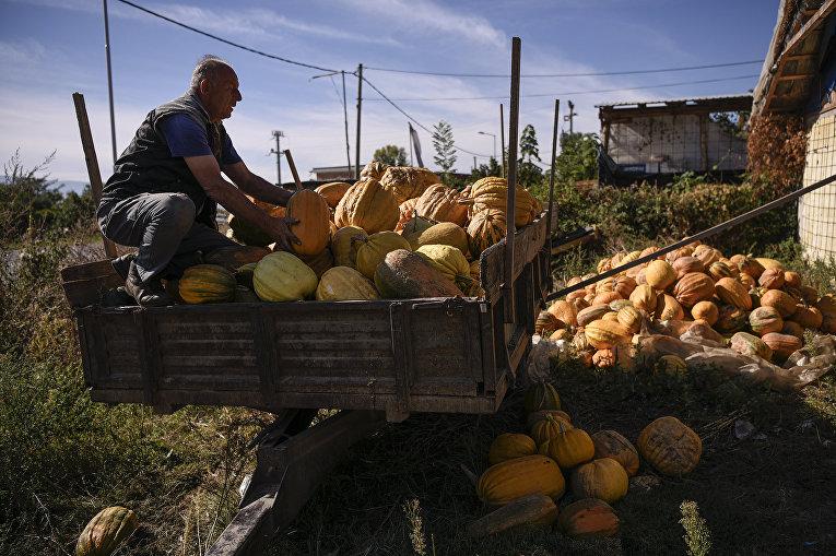 Сбор урожая тыкв в Добросте, Македония