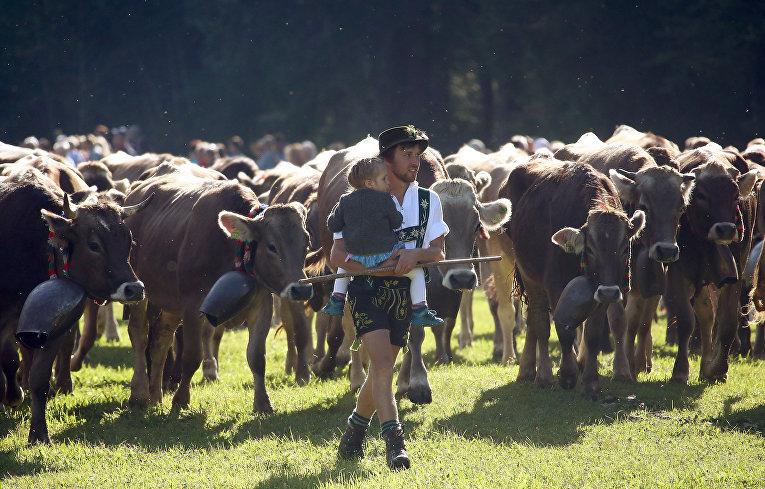 Отгон скота с летних пастбищ в Бад-Хинделанге