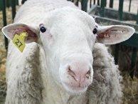 Международная выставка животноводства, сельского хозяйства и промышленности в Буэнос-Айресе