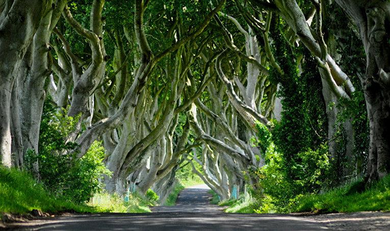 Темные преграды Армоя, Северная Ирландия