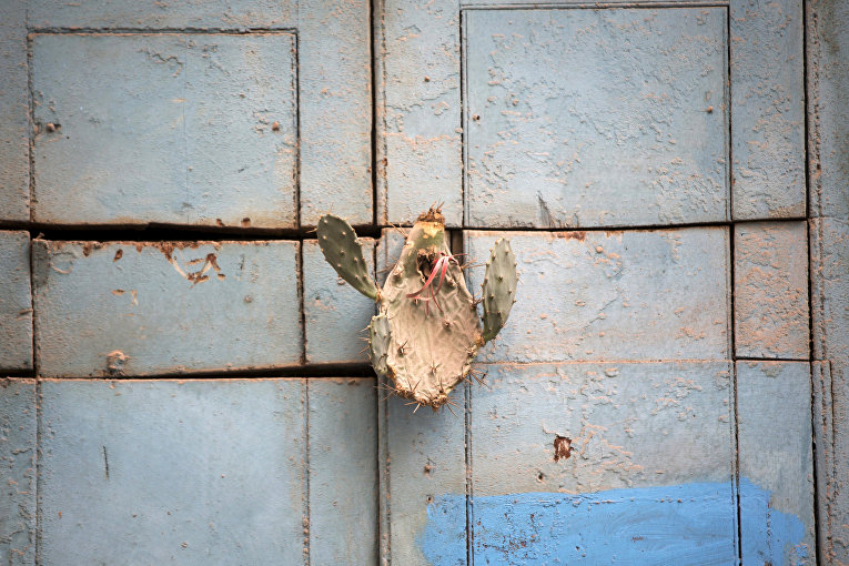 Кактус на двери дома последователей сантерии