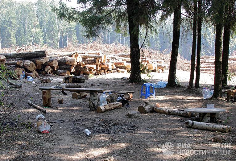 Ситуация в Химкинском лесу