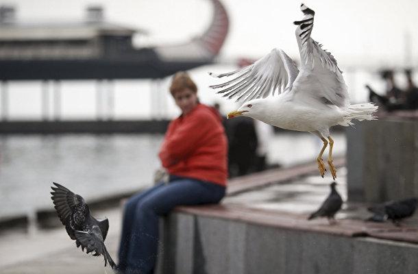Полет чайки и голубя над набережной Ялты