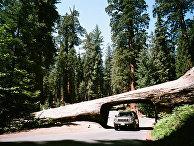 Национальный парк «Секвойя», Калифорния