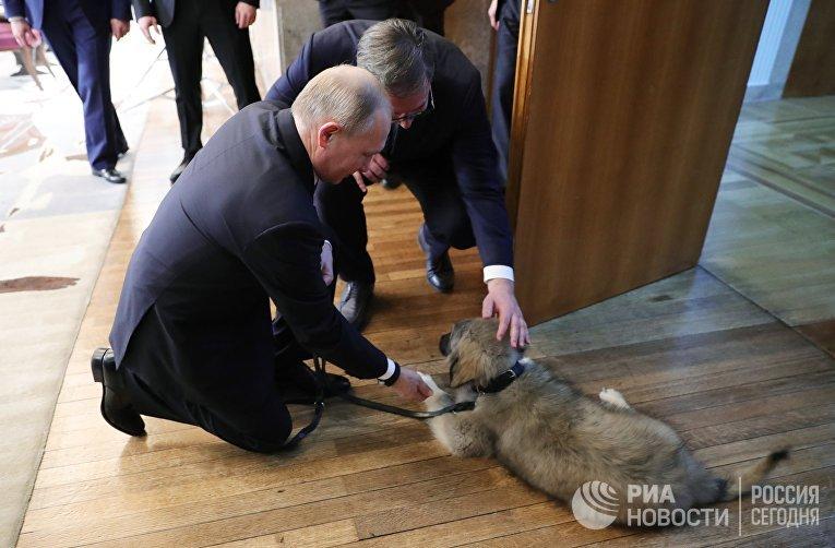 Президент РФ Владимир Путин и президент Республики Сербии Александр Вучич гладят щенка шарпланинской овчарки
