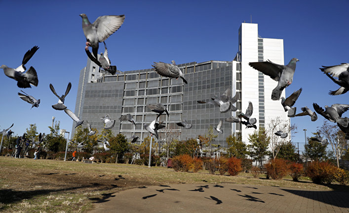 Голуби у здания, где под стражей содержится бывший глава Nissan Карлос Гон в Токио