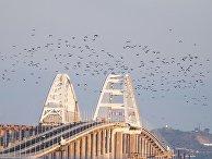 Птицы над Крымским мостом