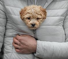 Мужчина держит щенка в теплой куртке
