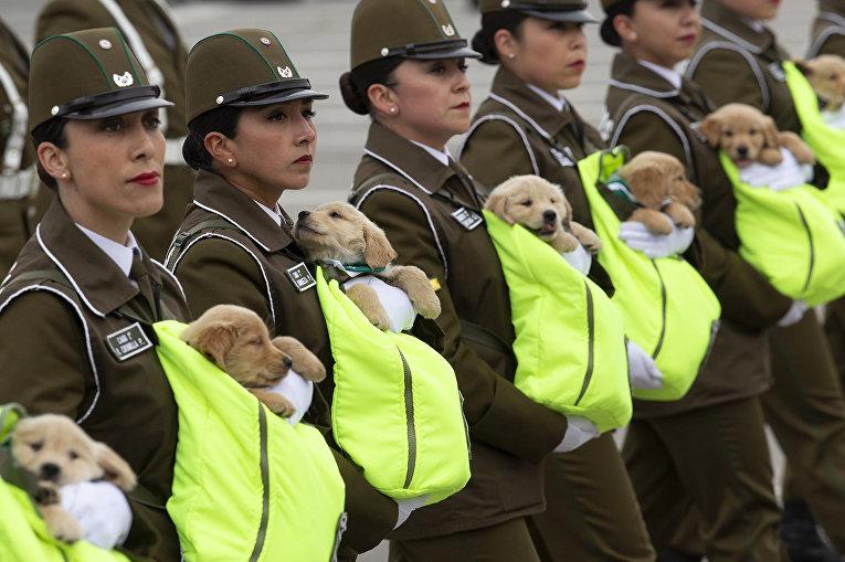 Чилийские женщины-полицейские маршируют с будущими полицейскими собаками