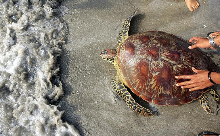 Животные и растения исчезают все быстрее