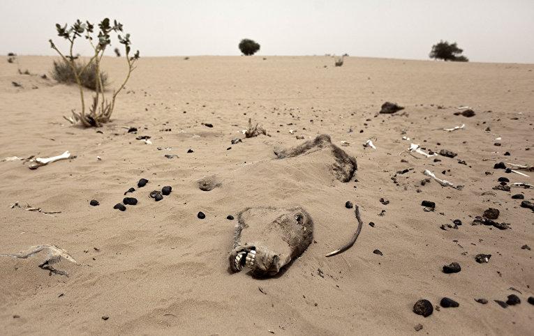 Ускорение вымирания
