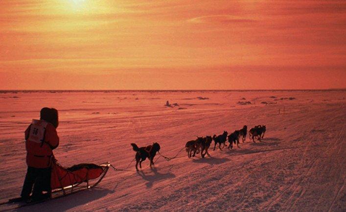 Катание на собачьих упряжках в окрестностях города Ном, Аляска
