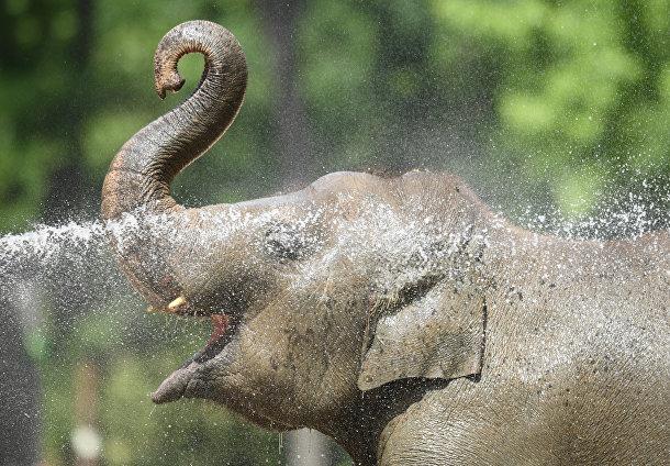 Слон принимает прохладную ванну в берлинском зоопарке