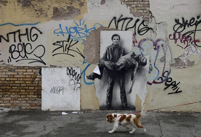 Собака пробегает мимо стены с граффити, окраины Рима, Италия