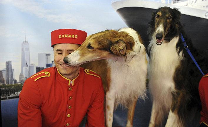 Русски борзые с хозяином на выставке собак в Англии