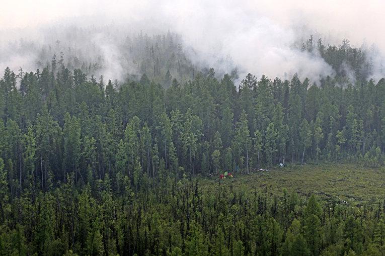 Лесной пожар в Богучанском районе Красноярского края