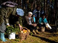 Сбор грибов в Новгородской области