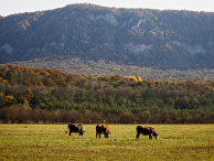 Осень в Краснодарском крае