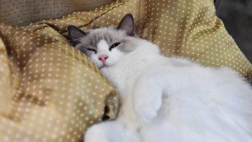 """Выставка кошек """"Кэтсбург"""""""