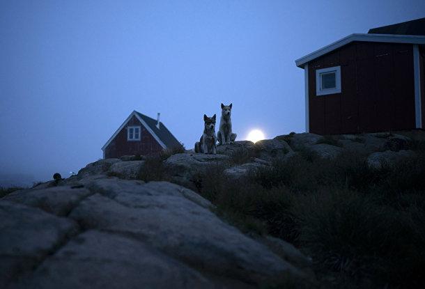 Собаки у дома в Кулусуке, Гренландия