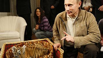 Владимир Путин представил журналистам подаренного тигренка