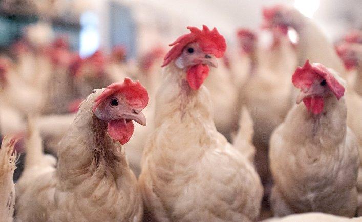 Птицефабрика «Пышминская» в Тюменской области