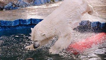 """Белые медведицы в красноярском зоопарке """"Роев ручей"""""""
