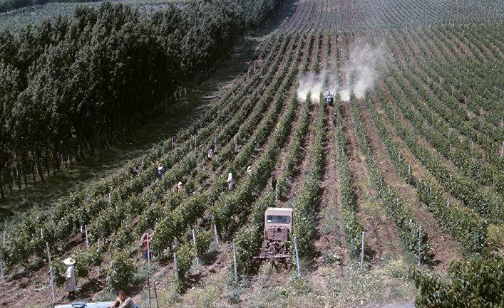 Самгорский виноградорский совхоз