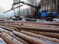 Вырубка леса и заготовка древесины