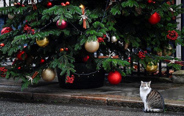 Кот Ларри у рождественской елки на Даунинг-стрит в Лондоне