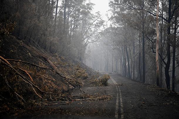 Упавшие деревья близ города Эдем, Австралия