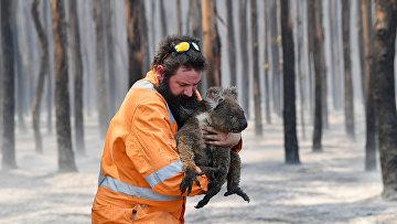 Спасатель с коалой в горящем лесу на острове Кенгуру, Австралия