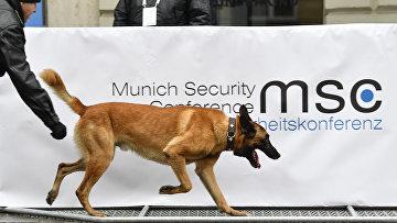 Пес у территории отеля Bayerischer Hof в Мюнхене, гден проходит Мюнхенская конференция по безопасности