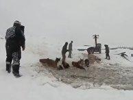 В России тракторист спас лошадей из ледяного плена