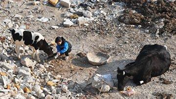 Ситуация в пригороде Дамаска Харасте