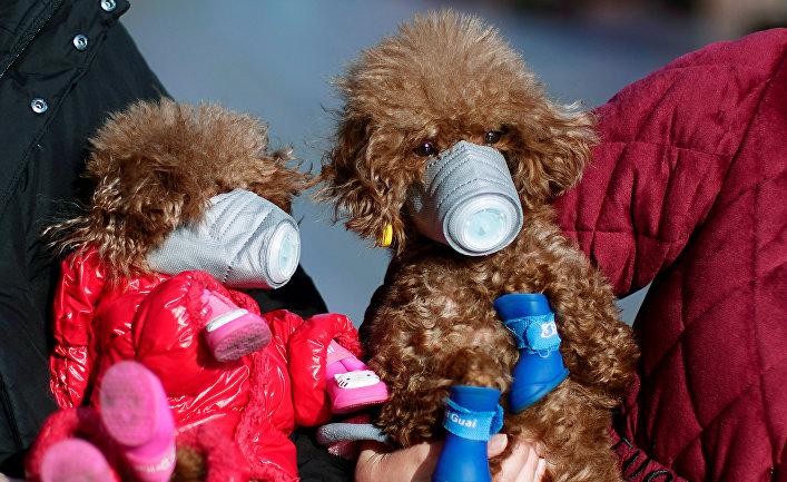 Собаки в медицинских масках в центре Шанхая